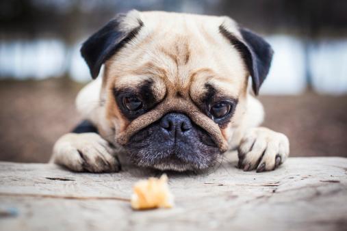 descriptive essay dog