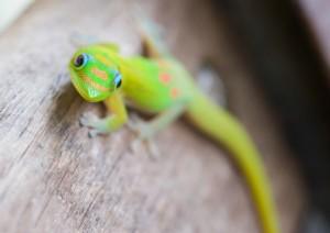 Geico Gecko