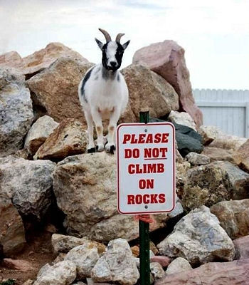 goat-blog