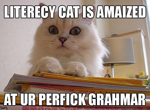 blog-lol-cat