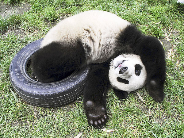 blog-panda