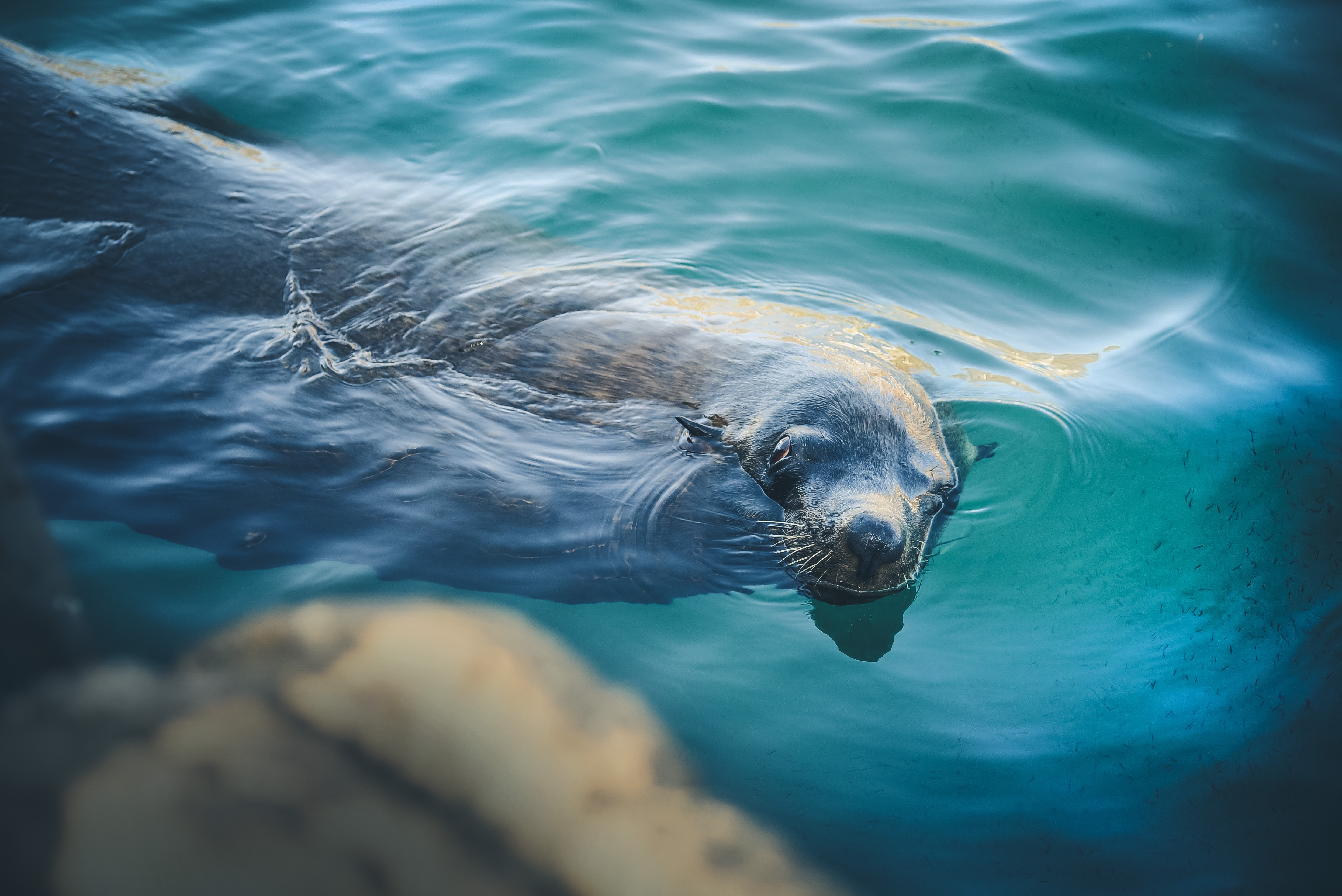 Just Keep Swimming: Surviving The First Year of Freelance Writing